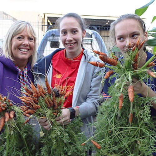garden gill carrots